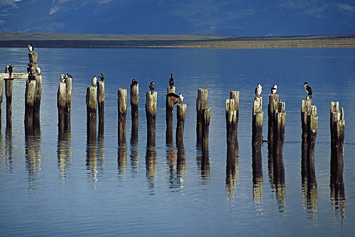 Lake near Puerto Natales Chile by caupolican