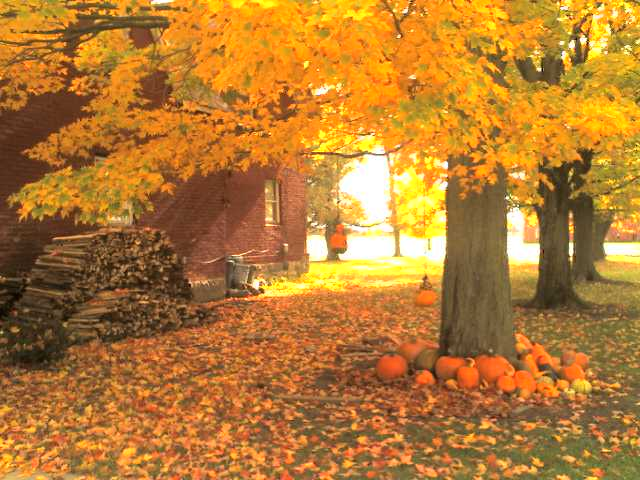 Image result for pics of pumpkins and trees