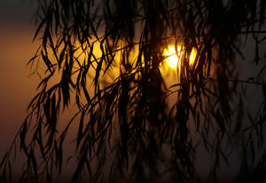 The sun behind the leaves