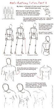 male anatomy tutor partII