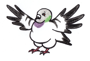 Show love for chubby pigeon! by Arnilo