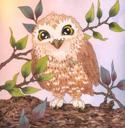 Com : Baby owl