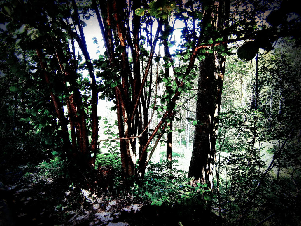 Woods by darkroomdream on deviantart - The hideout in the woods an artists dream ...