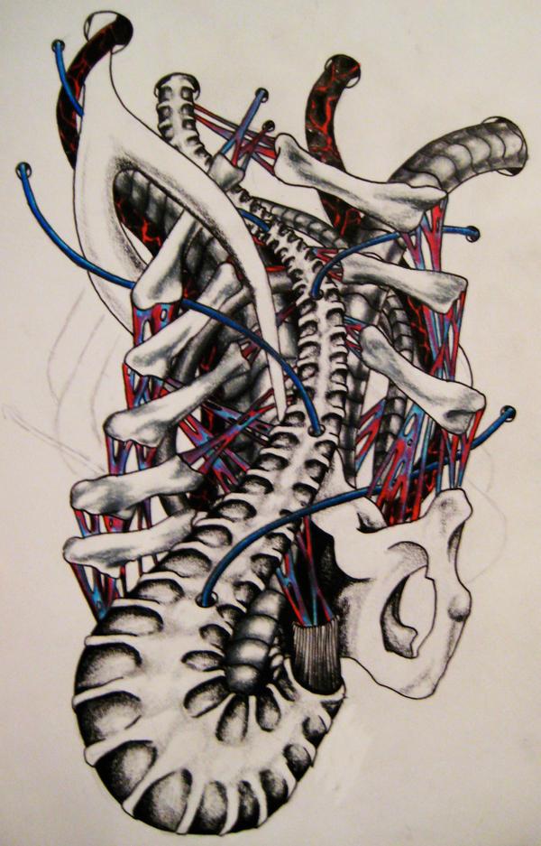 biomechanical spine drawings - photo #7