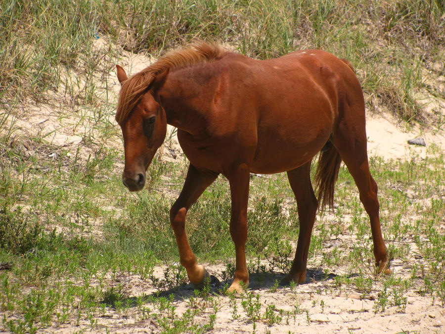 Wild At Heart Horse rp **Private for dogbreeder and animal ... - photo#33