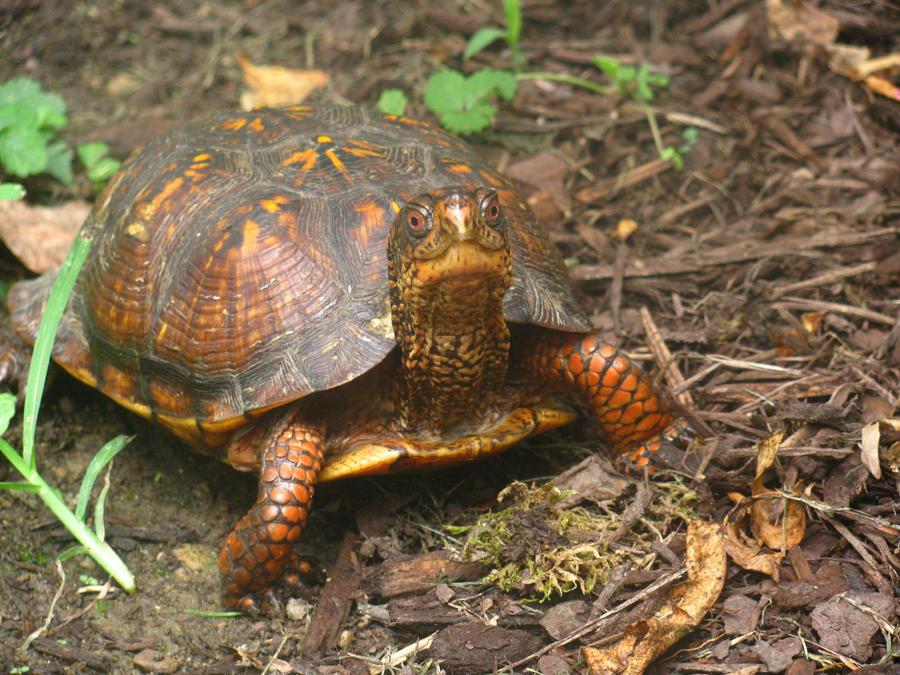 Happy Turtle by LittleHooves