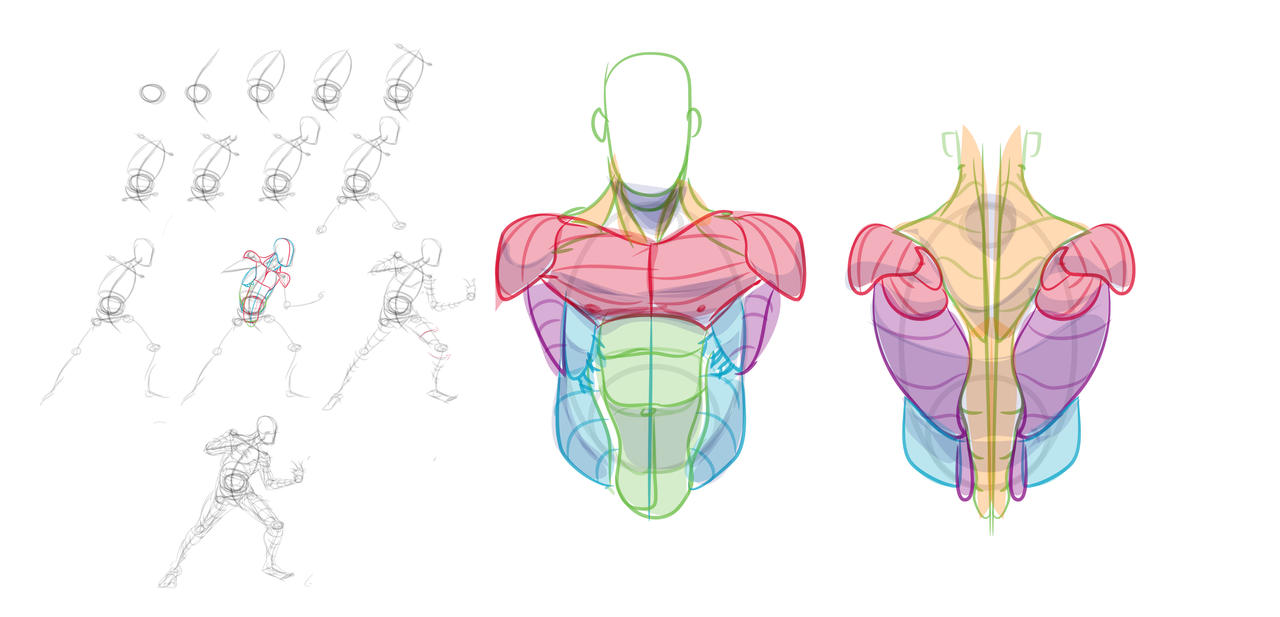 FIGURE PROCESS AND TORSO REF by HumanNature84