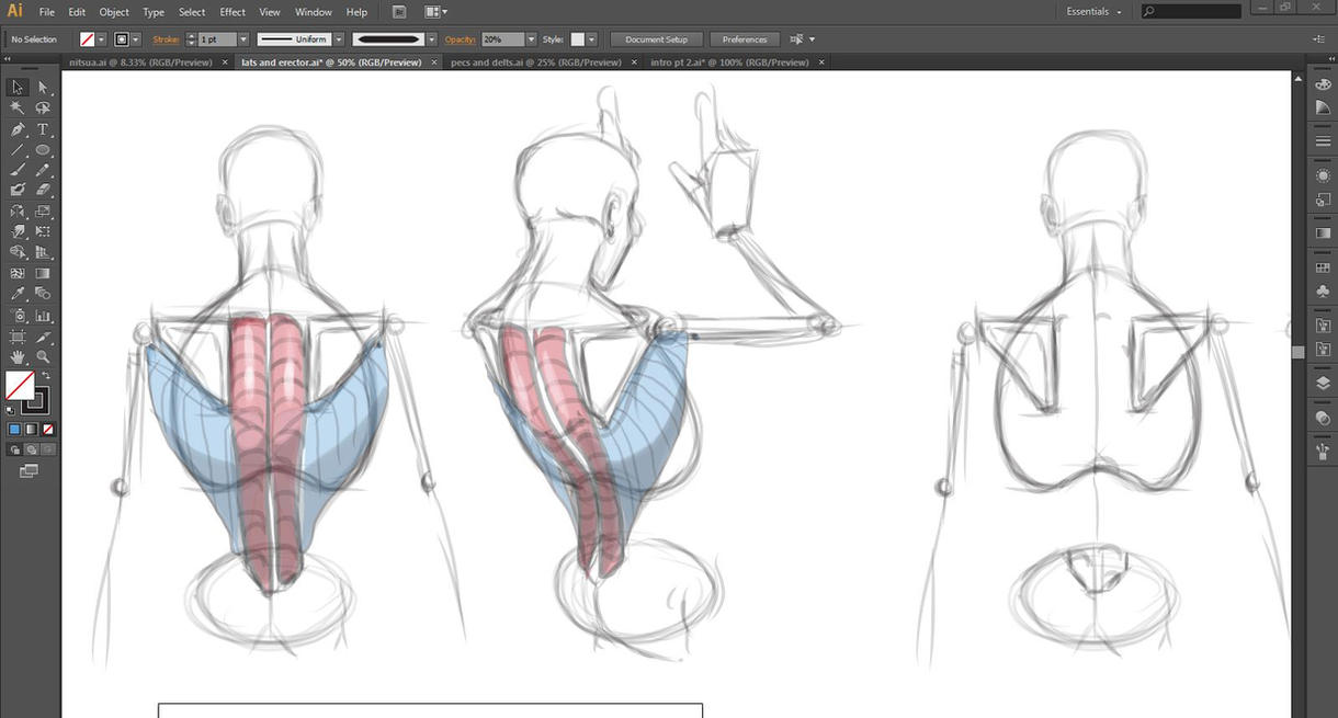 Anatomy Tutorial: Major Muscles of the Back by HumanNature84