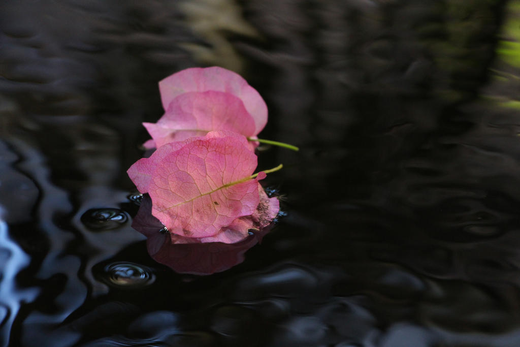 Petals on the Water by Orcanaria