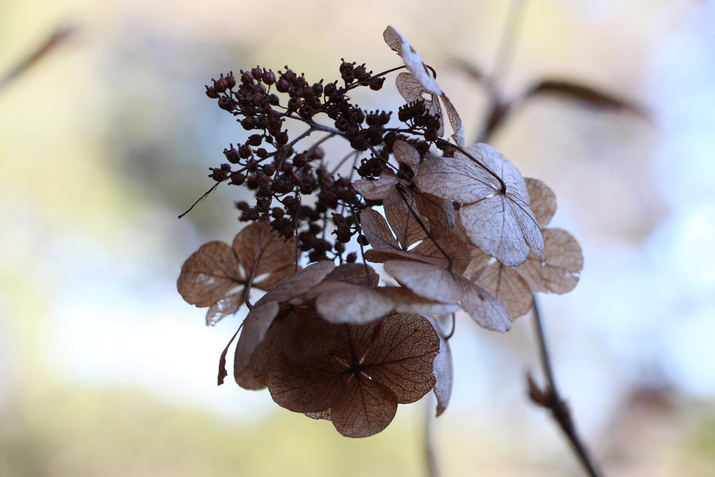 Little Brown Flowers by Orcanaria