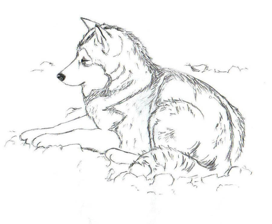 husky coloring pages - alaskan husky sketch templates sketch coloring page