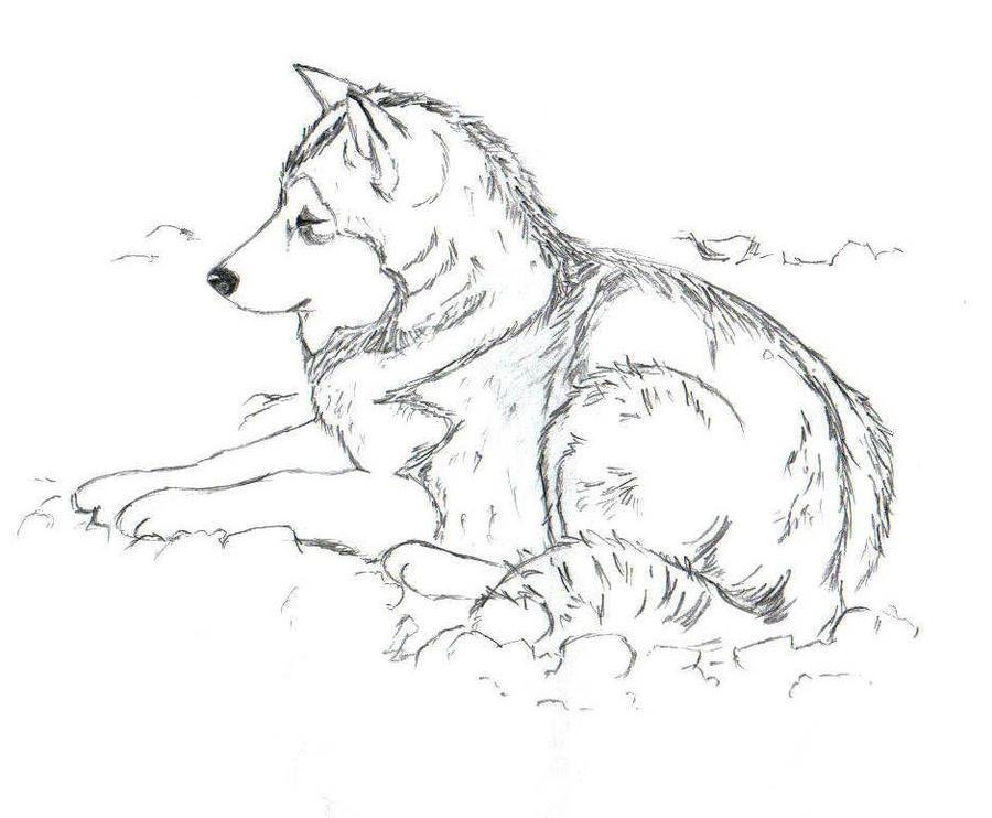 149059 Random Thread 1937 furthermore Kristina Wayborn 03 further Winged Husky Sketch 310864314 likewise Siberian Husky Ausmalbilder moreover Alaskan Malamute 146809994. on alaskan husky puppies wallpaper