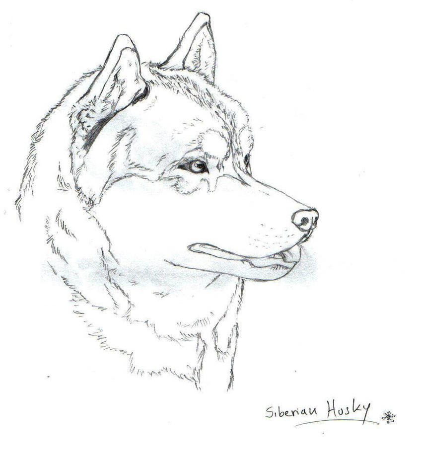 Husky face coloring coloring pages for Husky puppy coloring pages