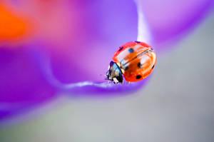 Nature by EllinorBergman
