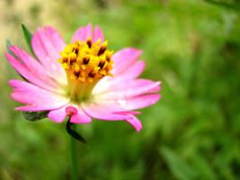 Just Bloom by zekkoukyo