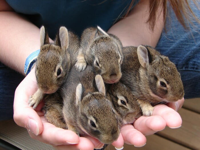 Five Small Bunnies