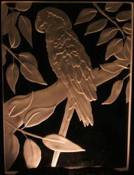 Parrot by Cassandra-Rising