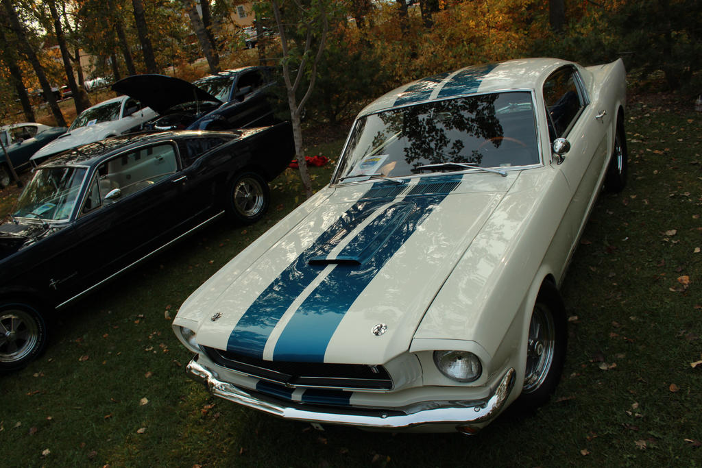 Carroll's Mustang by KyleAndTheClassics