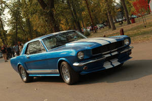 Beautiful Mustang Revisited by KyleAndTheClassics