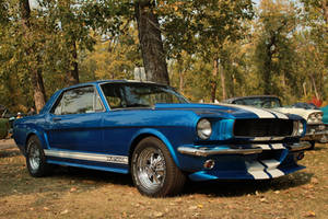 Mustang Among Trees by KyleAndTheClassics