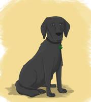 Zeotrix Dog! by lookup4napkins