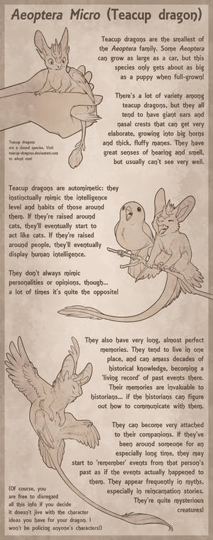 Teacup Dragon Species Sheet