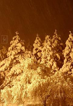 Winter night photo 2020
