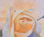 Rose by skshizuka