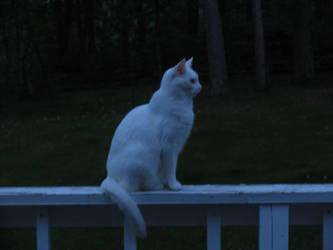 Cat - Star Gazing