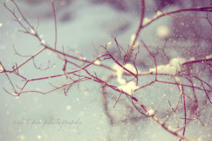 Simply by SweetPeaPhototc