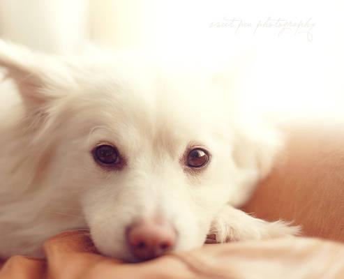 Photohunt: Soft