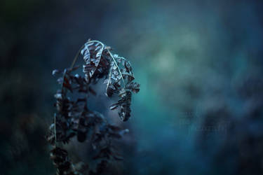Frost Lets Loose by SweetPeaPhototc