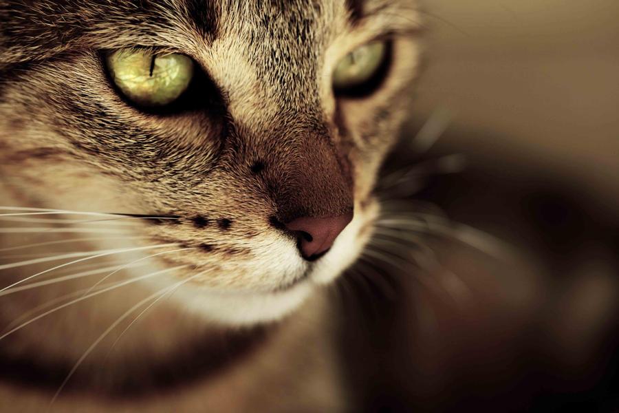 Souvenirs d'une vie lointaine [Épreuve n°3] -Déconseillé aux âmes sensibles et aux orthographophiles- Eye_of_my_Tiger_by_LGimagined