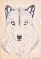 A good wolf by Berandas