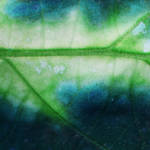 streams of green