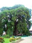 Tule Tree 01 by Niaoblis