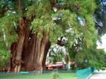 Tule tree 02 by Niaoblis