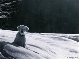 Snow joy by KissOnTheRain