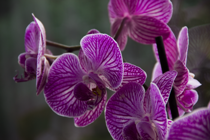 Violet queen of flowers II. by B-onDA
