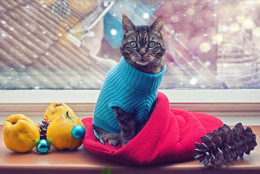 Katzenweihnacht by anriloane