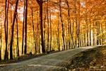 endless autumn