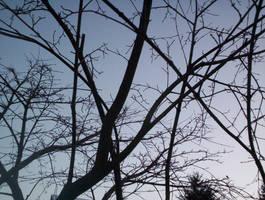 Branches across the Sky by La-Belle-Araignee