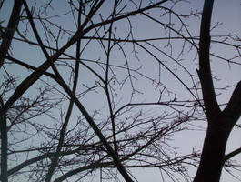 Branches across the Sky 2 by La-Belle-Araignee