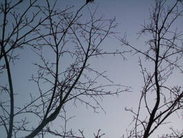 Branches across the Sky 3 by La-Belle-Araignee