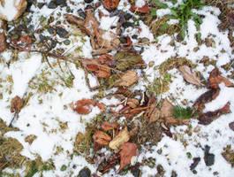 Autumn and Winter Clash by La-Belle-Araignee