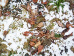 Autumn and Winter Clash