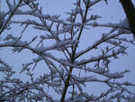 Branches with Snow 1