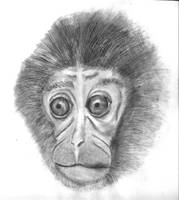 Monkey by TheConclusion