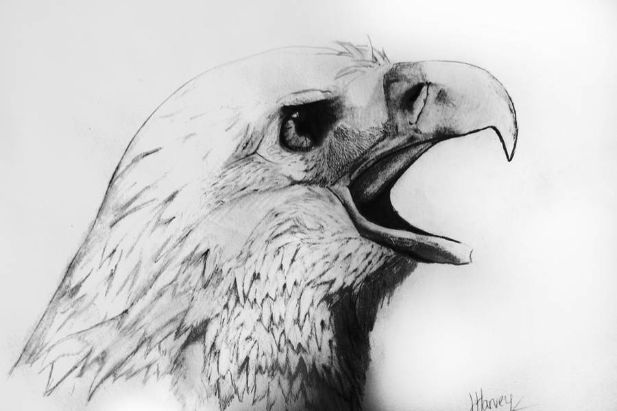 Bald Eagle Pencil Drawing by TheConclusion