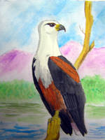 African Fishing Eagle by Halycon-Thanatos